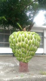 Down south is custard apple country- too bad they weren't in season!