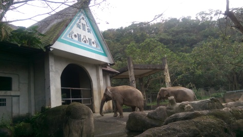 Cool Things To Do In Taipei #238: Visit Taipei Zoo
