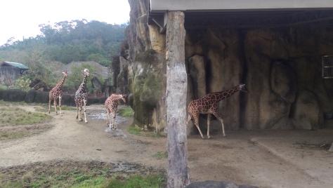 Cool Things To Do In Taipei #238: Visit Taipei Zoo