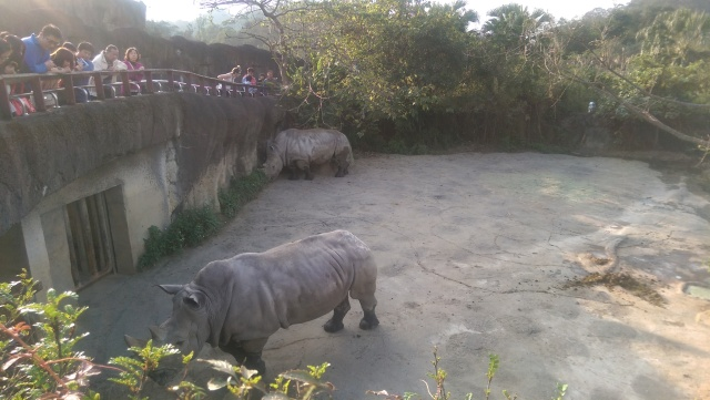 rhinotaipeizoo.jpg