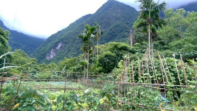 A small farm in Hualian County, Taipei