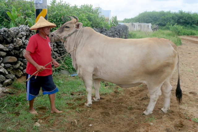 Man from Nanliao with his ox
